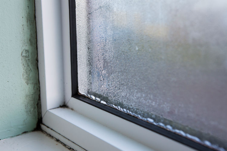 Is It Time to Replace My Windows?